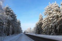 Paisagem do inverno. Fuga da floresta. Imagens de Stock Royalty Free