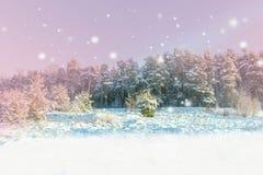 Paisagem do inverno Fundo do Xmas com flocos de neve brancos Luz solar na floresta do inverno Imagem de Stock Royalty Free