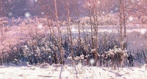 Paisagem do inverno Fundo do Xmas com flocos de neve brancos Luz solar na floresta do inverno Foto de Stock Royalty Free