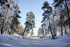 Paisagem do inverno. Lago de madeira sob a neve e o gelo. Fotografia de Stock