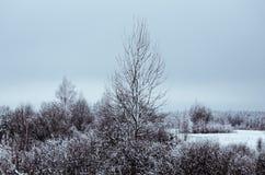 Paisagem do inverno do levantamento da árvore fotografia de stock royalty free