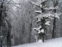 Paisagem do inverno mim Fotos de Stock Royalty Free