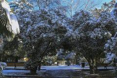 Paisagem do inverno na cidade Foto de Stock Royalty Free