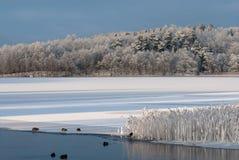 Paisagem do inverno na costa oeste na Suécia fotos de stock