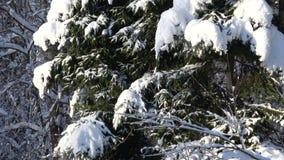 Paisagem do inverno na floresta filme