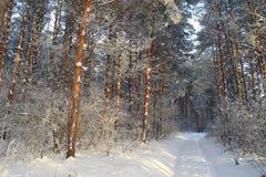 Paisagem do inverno na floresta Imagem de Stock Royalty Free