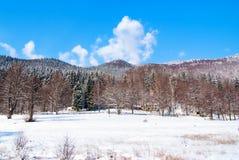 Paisagem do inverno na floresta Fotografia de Stock