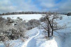Paisagem do inverno na ilha de Khortitsa em Zaporizhzhia imagens de stock