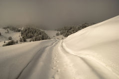 Paisagem do inverno na névoa Fotos de Stock Royalty Free