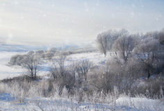 Paisagem do inverno na natureza da neve Foto de Stock
