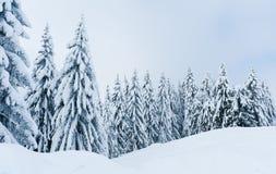 Paisagem do inverno nas montanhas com neve e as árvores cobertos de neve imagem de stock royalty free