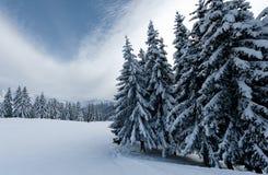 Paisagem do inverno nas montanhas com neve e as árvores cobertos de neve fotos de stock royalty free