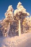 Paisagem do inverno no por do sol Imagens de Stock Royalty Free