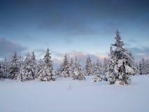Paisagem do inverno pela floresta Imagem de Stock Royalty Free