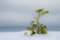 Paisagem do inverno pelo mar Imagens de Stock Royalty Free