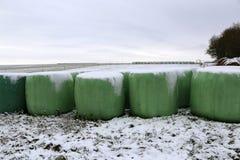 Paisagem do inverno Rolls com forragem no inverno fotografia de stock