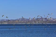 Paisagem do inverno Um rebanho das gaivotas está voando sobre o mar foto de stock