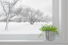 Paisagem do inverno vista através do indicador, e planta verde imagem de stock royalty free