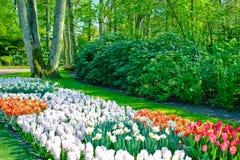 Paisagem do jardim da mola Fotografia de Stock Royalty Free