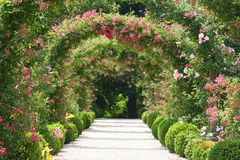 Paisagem do jardim de rosas Foto de Stock
