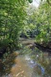 Paisagem do labirinto da floresta de Tricrate, Ucrânia Fotografia de Stock Royalty Free