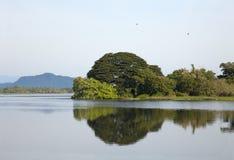 Paisagem do lago - árvores verdes com reflexão da água Fotos de Stock Royalty Free