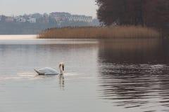 Paisagem do lago com cisnes da natação foto de stock