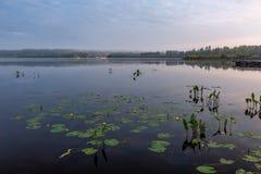 A paisagem do lago com nuphar floresce no primeiro plano Imagens de Stock