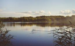 Paisagem do lago com patos Imagens de Stock Royalty Free