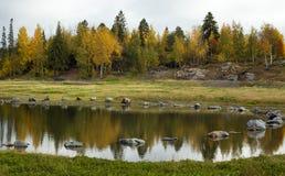Paisagem do lago e das árvores Imagens de Stock Royalty Free