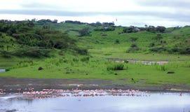 Paisagem do lago flamingo Fotografia de Stock