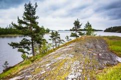 Paisagem do lago ladoga Pinheiros imagem de stock