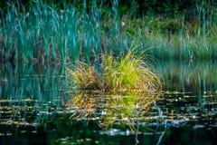 Paisagem do lago swamp fotografia de stock royalty free