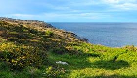 Paisagem do litoral de Cantábria Imagem de Stock