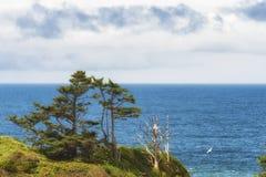 paisagem do litoral de Oregon do Cópia-espaço fotografia de stock royalty free