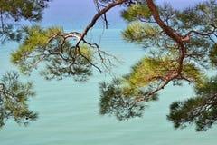 Paisagem do mar com pinheiro foto de stock