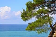Paisagem do mar com pinheiro fotografia de stock