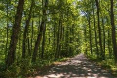 Paisagem do mato dentro de uma floresta nas montanhas de Apennines fotos de stock royalty free
