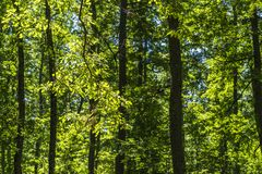 Paisagem do mato dentro de uma floresta nas montanhas de Apennines imagens de stock