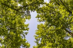Paisagem do mato dentro de uma floresta nas montanhas de Apennines imagem de stock