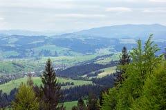 Paisagem do montanhas com abeto e o vale verde Imagem de Stock