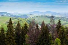 Paisagem do montanhas com abeto e o vale verde Fotos de Stock Royalty Free