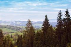 Paisagem do montanhas com abeto e o vale verde Fotografia de Stock Royalty Free