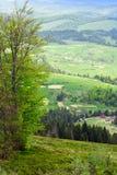 Paisagem do montanhas com abeto e o vale verde com tre Fotografia de Stock Royalty Free