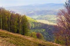 Paisagem do montanhas com abeto e o vale verde com tre Imagens de Stock
