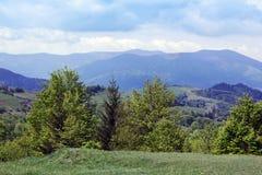 Paisagem do montanhas de Carpathians com árvores e o abeto verdes Imagens de Stock Royalty Free