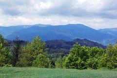 Paisagem do montanhas de Carpathians com árvores verdes e abeto-tr Imagens de Stock