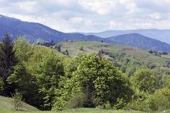 Paisagem do montanhas de Carpathians com árvores verdes e abeto-tr Foto de Stock Royalty Free