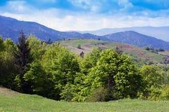 Paisagem do montanhas de Carpathians com árvores verdes e abeto-tr Imagem de Stock Royalty Free
