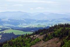 Paisagem do montanhas de Carpathians com abeto e va gramíneo Fotos de Stock